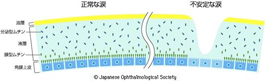 涙液の構造